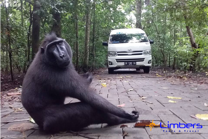 Hiace @Taman Nasional Tangkoko